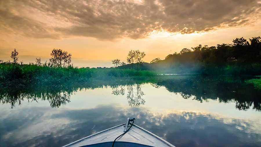 La biodiversidad es la base que sustenta la vida, y tiene relación con todos los aspectos de la salud humana.