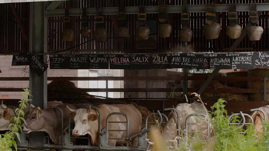 'La leche: hechos y creencias'