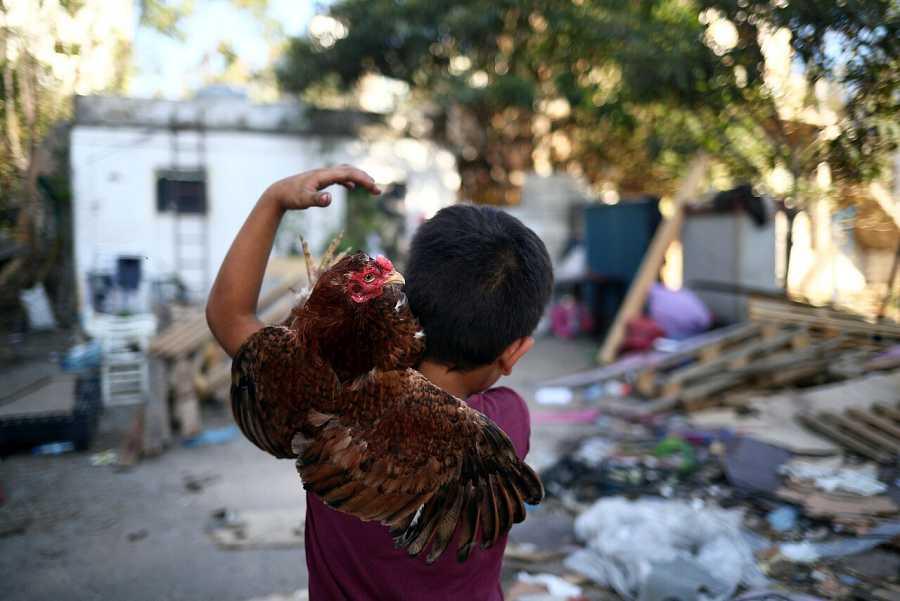 Un niño sujeta una gallina frente a su casa tras la explosión de Beirut