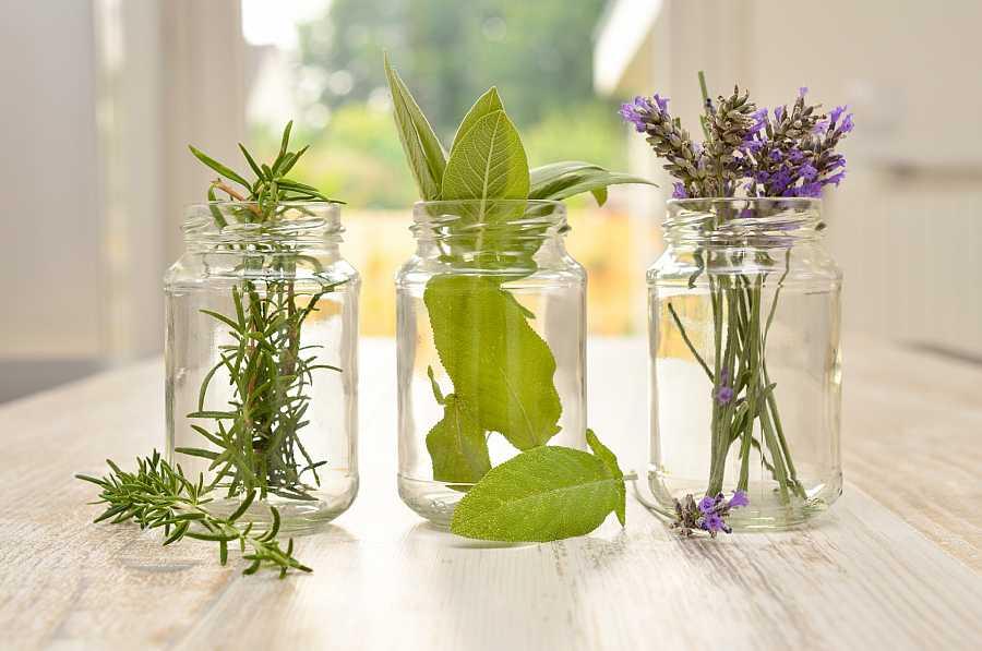 Plantas decorativas: repeler insectos