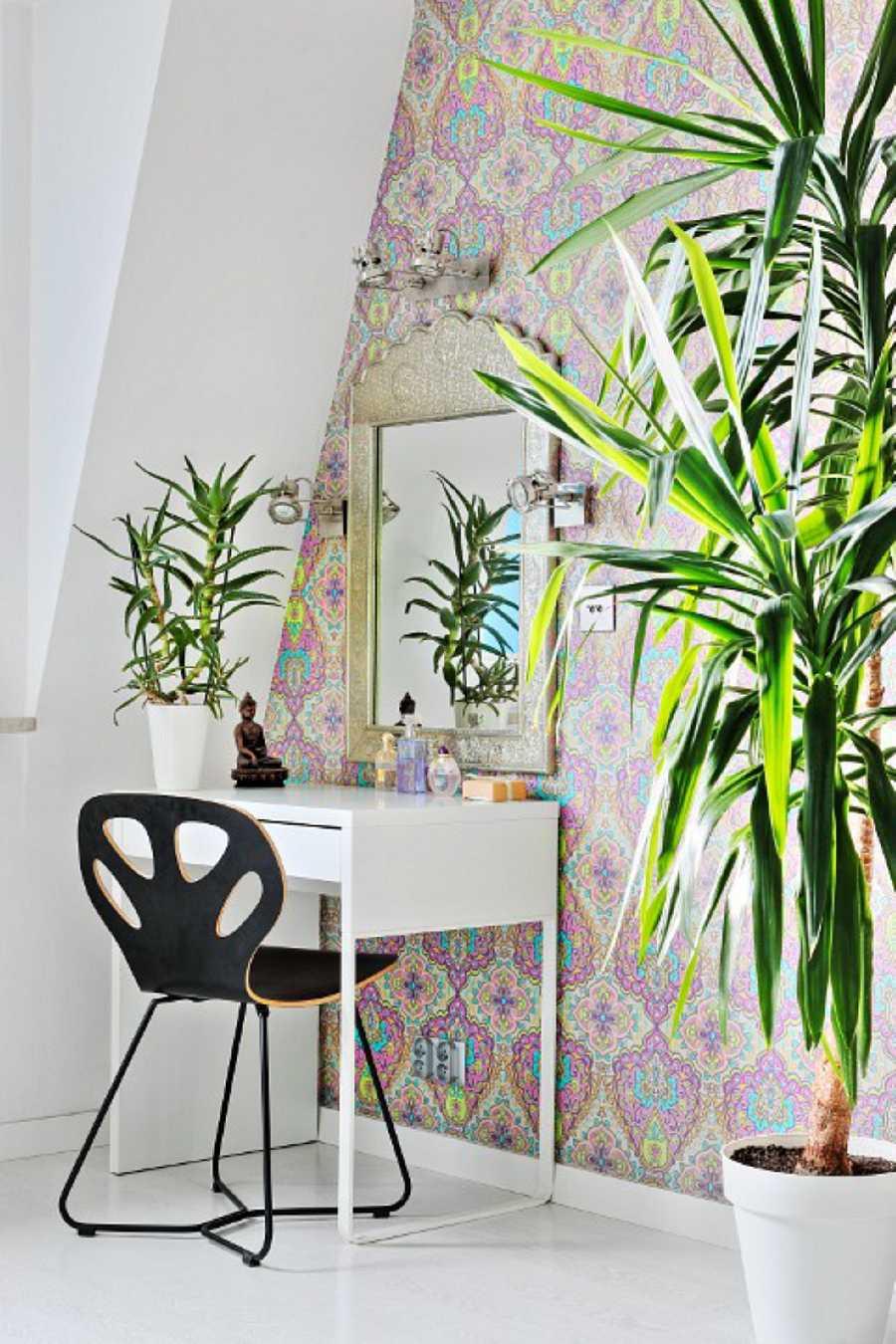Planta de interior: la dracaena