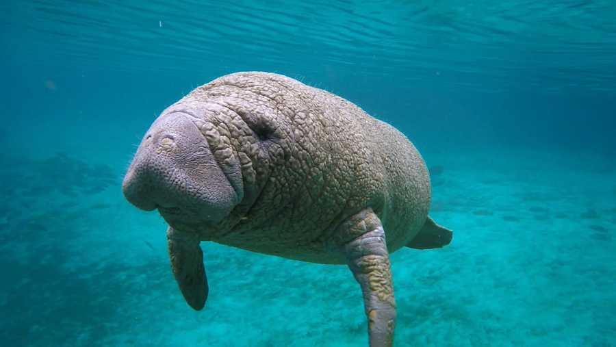 Los mamíferos marinos se desplazan moviendo la aleta caudal de arriba abajo.
