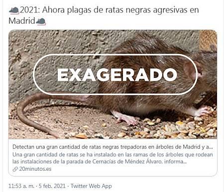 Tuit alarmando sobre la presencia de ratas en Madrid y el sello de VerificaRTVE con la palabra exagerado.