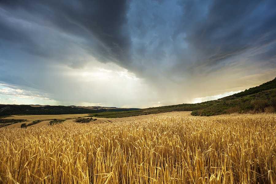 Campos de cultivo de cereales