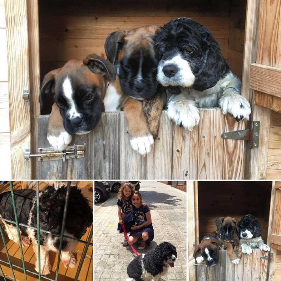 Los perros, los mejores amigos de Tamara