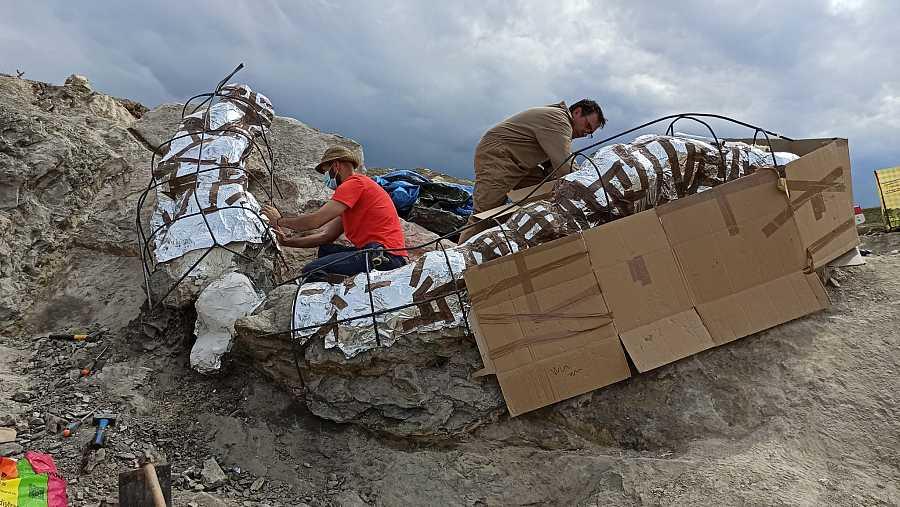 Paleontólogos tras la excavación de la serie vertebral articulada, una vez protegida con yeso
