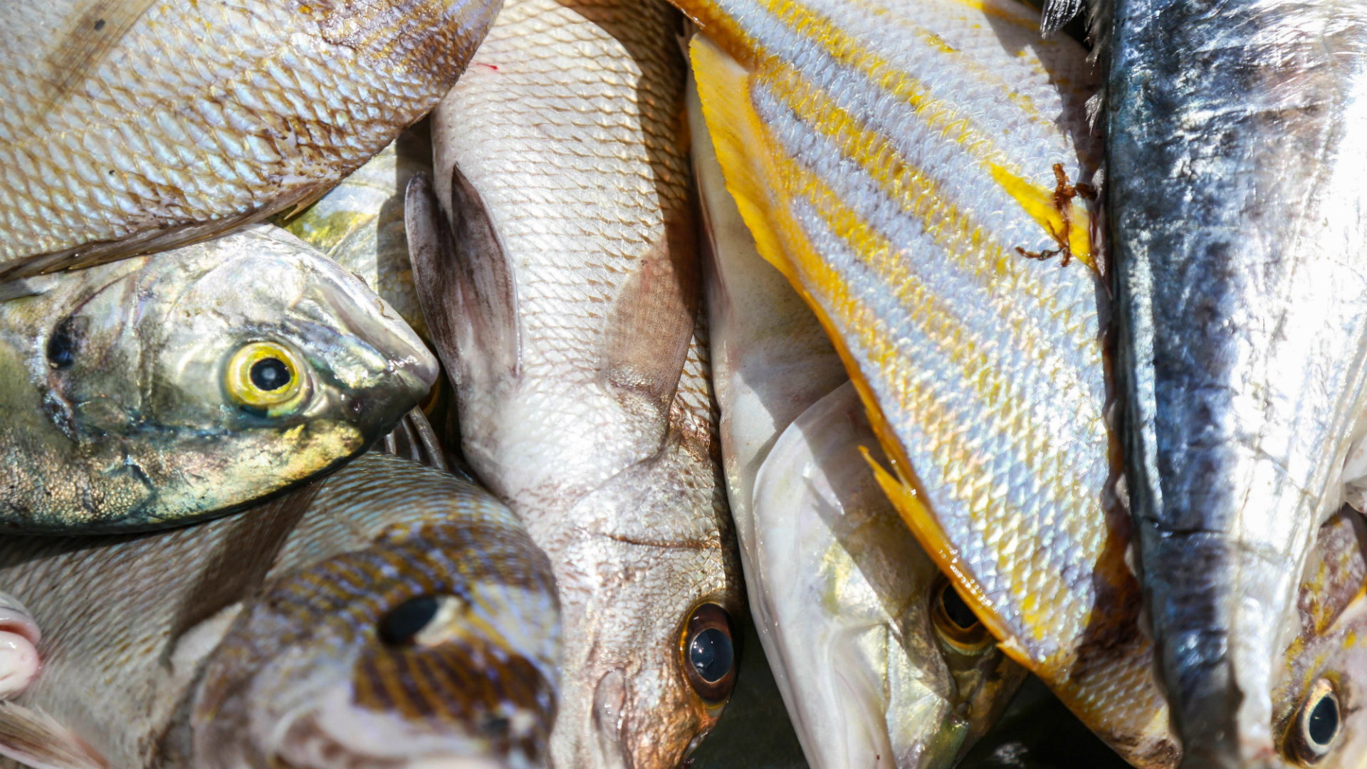 se puede comer pescado y mariscos durante el embarazo