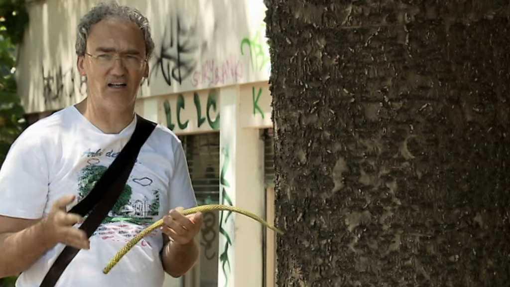 El escarabajo verde - El árbol de mi calle