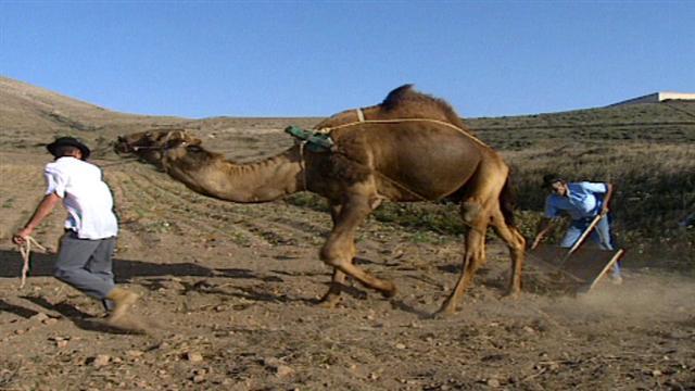 Senderos Isleños - Camelleros