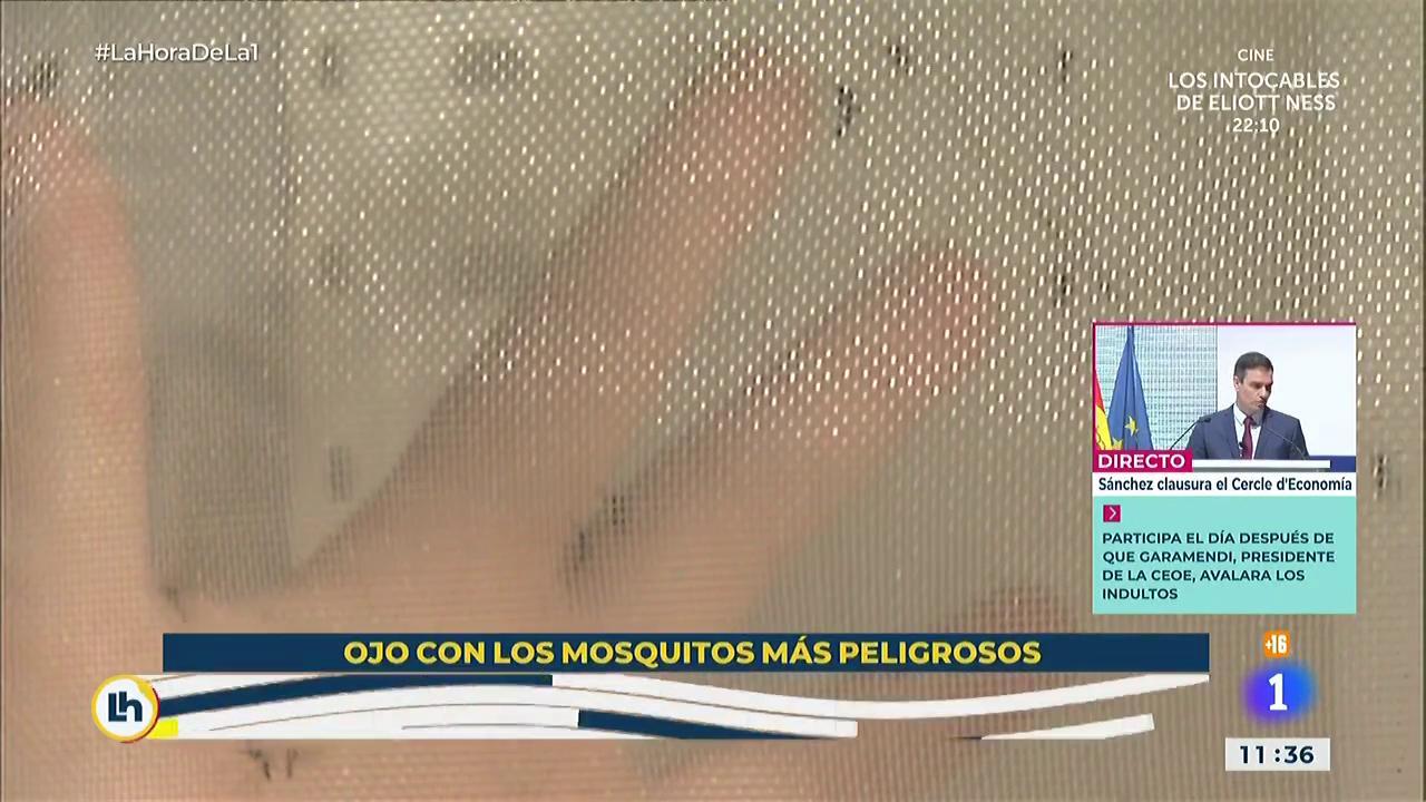 Cómo protegerse de los mosquitos en verano