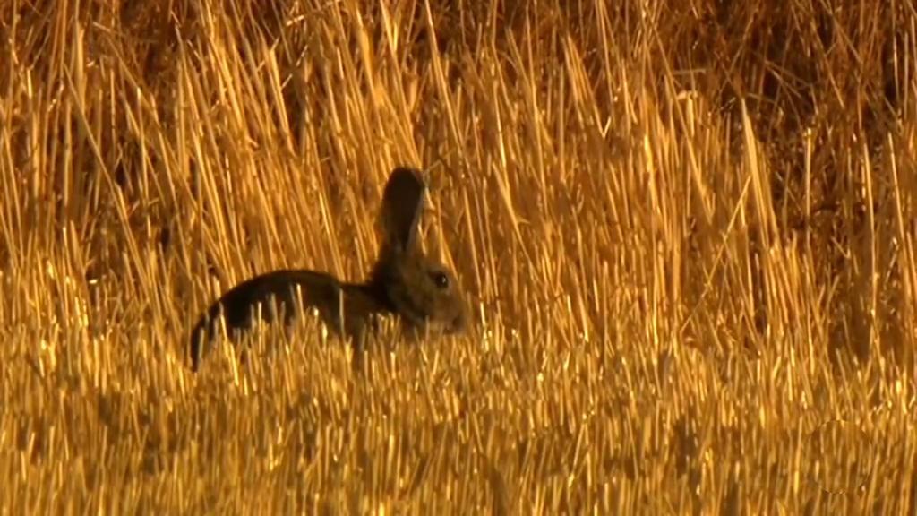 Jara y sedal - Los conejos de Villahermosa