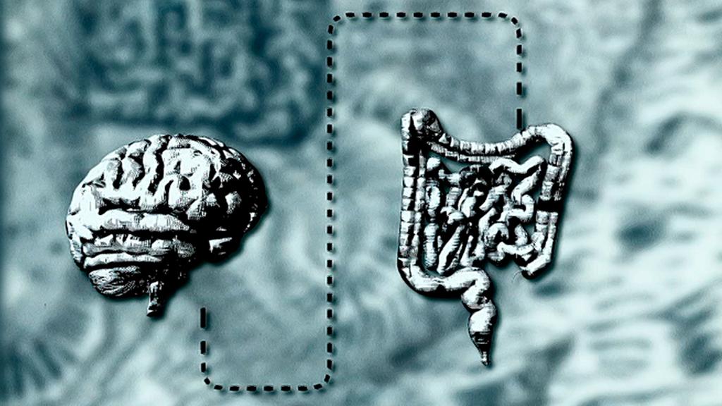 El vientre, nuestro segundo cerebro (Documental)