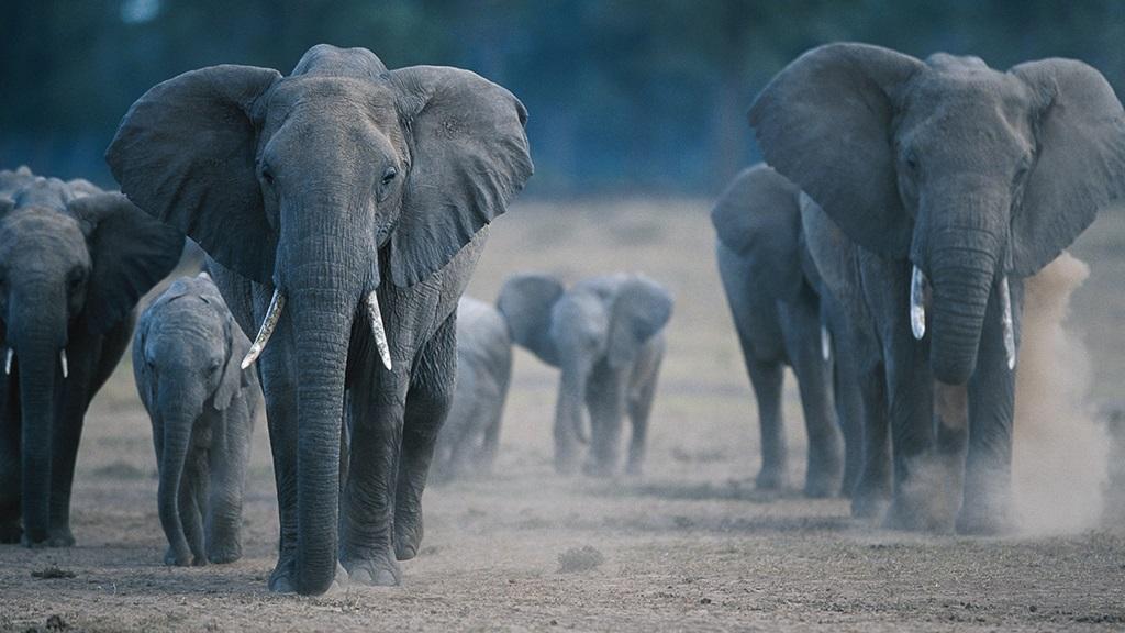 Hoanib. Los secretos de los elefantes del desierto