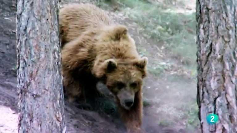 Naturalmente - El hábitat del oso pardo