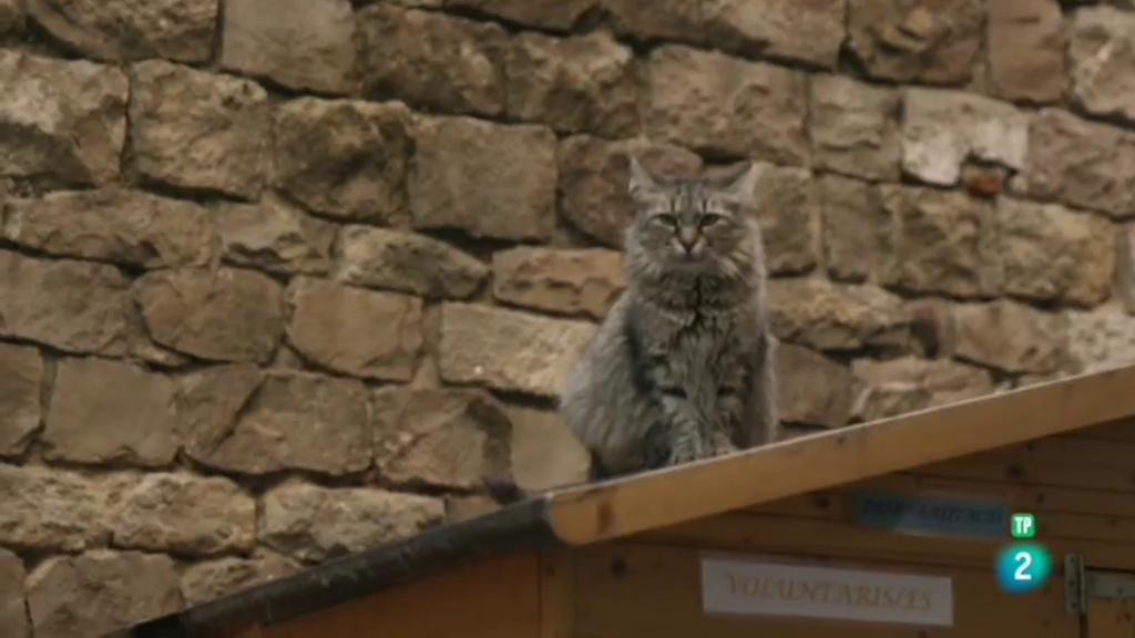 La meva mascota - El jardinet dels gats