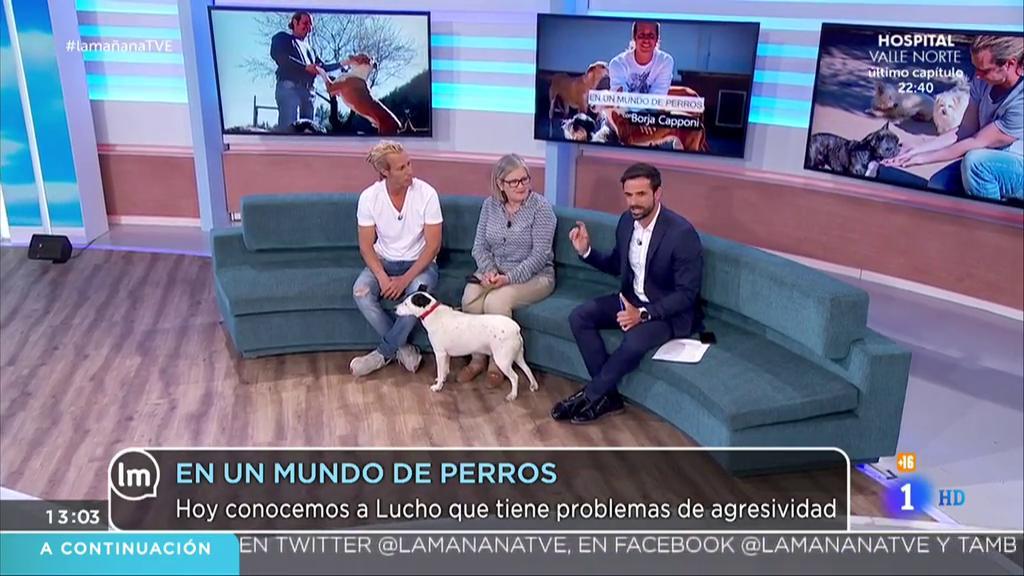 La Mañana - En un mundo de perros