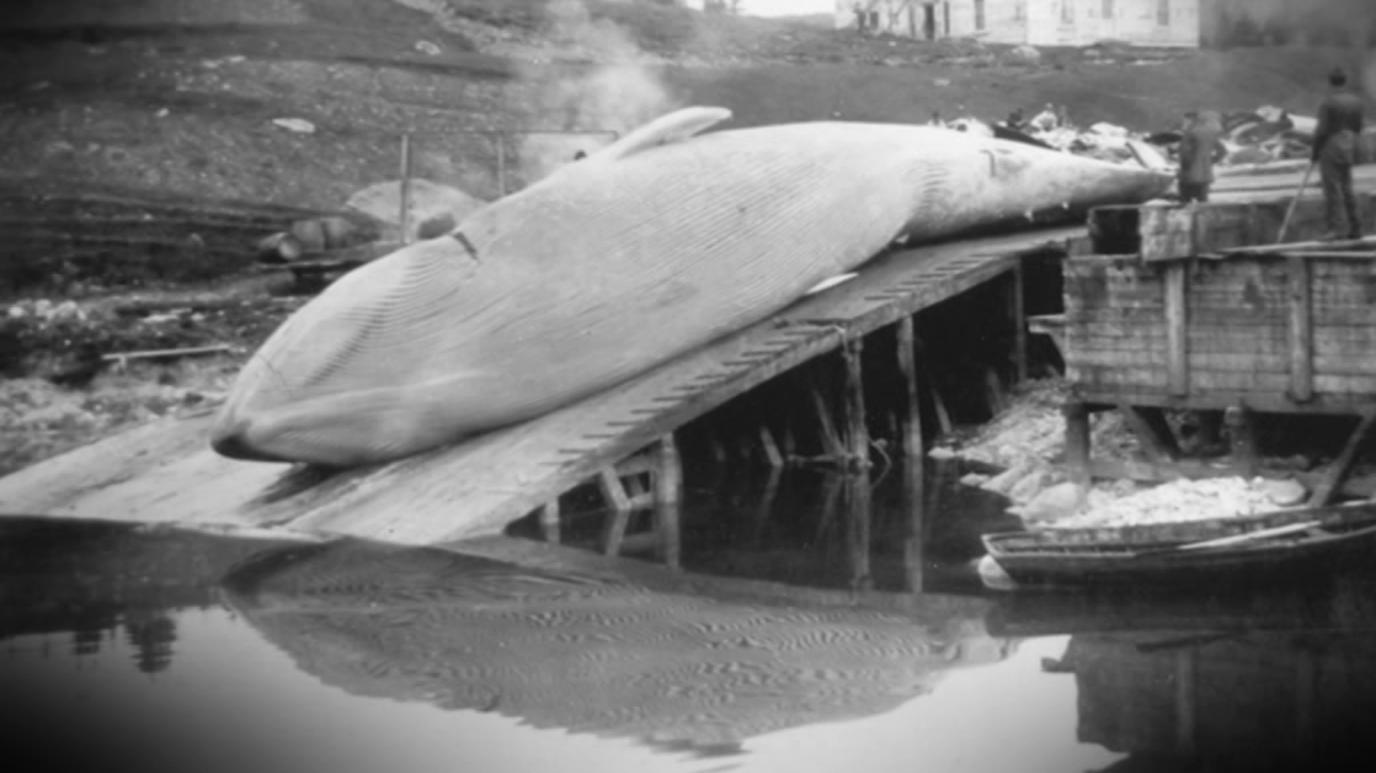 El documental - La memoria del arpón
