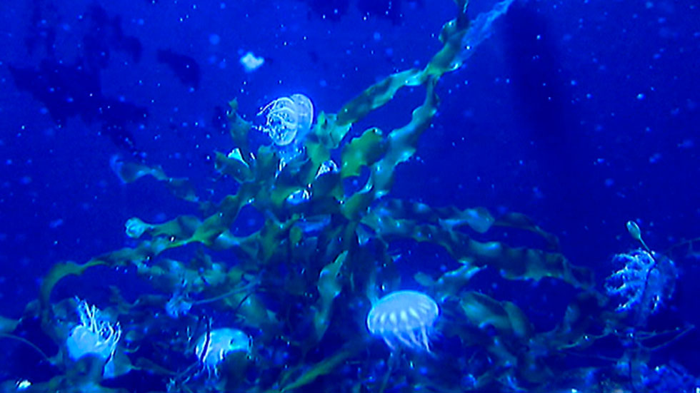Objetivo: frenar a las medusas en las playas