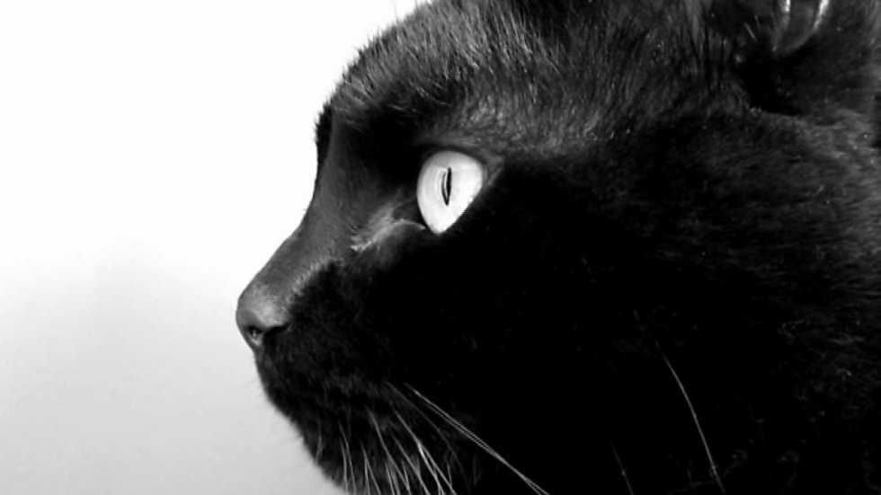 tres14 - Perros y gatos