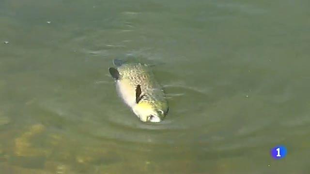 La pesca con mosca, una modalidad que permite al pez vivir