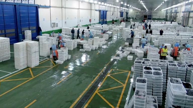 España a ras de cielo - El protocolo del pescado en el Puerto de Vigo