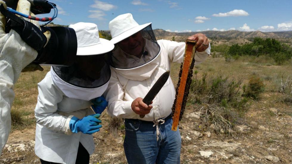 Aquí la tierra - Los riesgos de coger miel