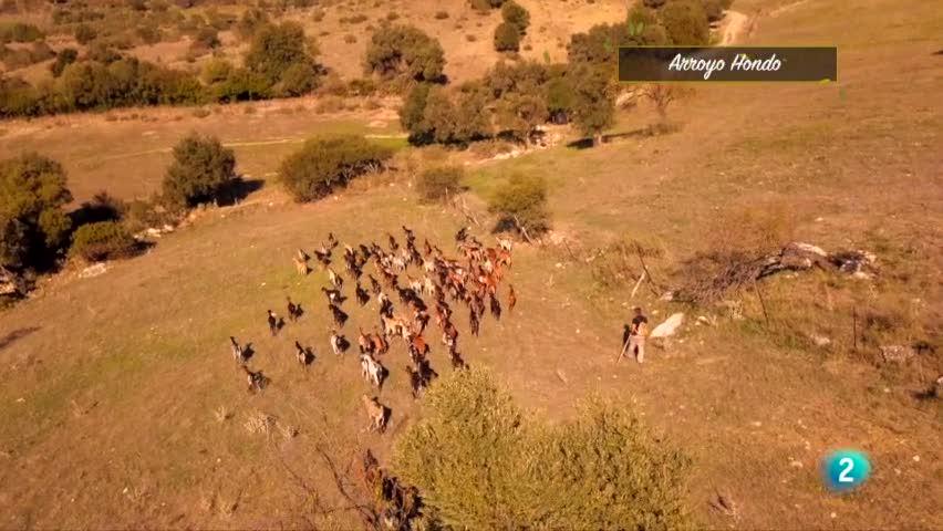 Las Rutas Capone - Roberto aprende a manejar las cabras con la honda