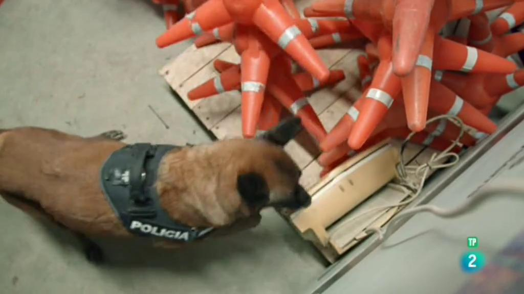 La meva mascota i jo - La Unitat Canina dels Mossos d'Esquadra