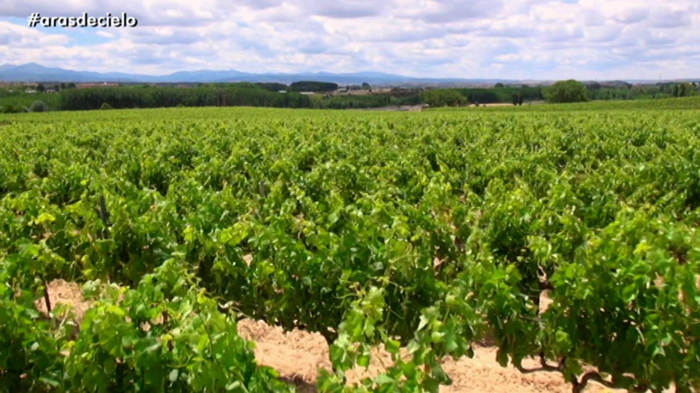 España a ras de cielo - El viñedo del mundo