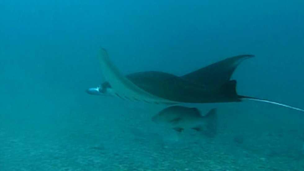 Bubbles - Yap en la Micronesia