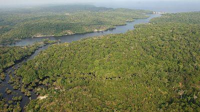 La selva del Amazonas lleva diez años expulsando más dióxido de carbono del que puede absorber