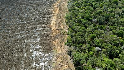 La Amazonía brasileña bate su récord histórico de deforestación en abril tras perder más de 580 km de selva