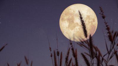 Eclipse y 'superluna de las flores' ¿Cómo se puede ver este doble fenómeno astronómico?