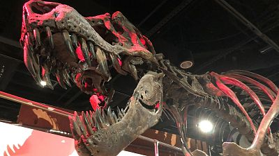 Un estudio asegura que unos 2.500 millones de Tiranosaurios rex habitaron la Tierra
