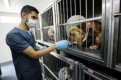 Los casos de maltrato animal se multiplican en España con la pandemia
