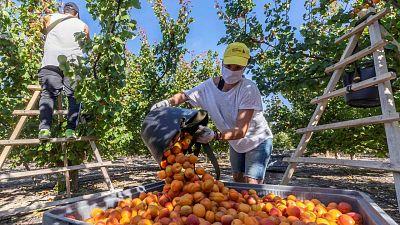 La subida del salario mínimo a 900 euros frenó la creación de hasta 140.000 empleos en 2019, según el Banco de España
