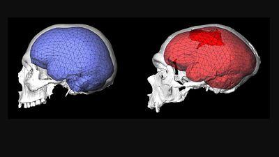 El cerebro humano moderno evolucionó en África hace unos 1,7 millones de años