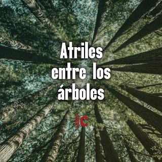 Atriles entre los árboles  con Mercedes Menchero Verdugo