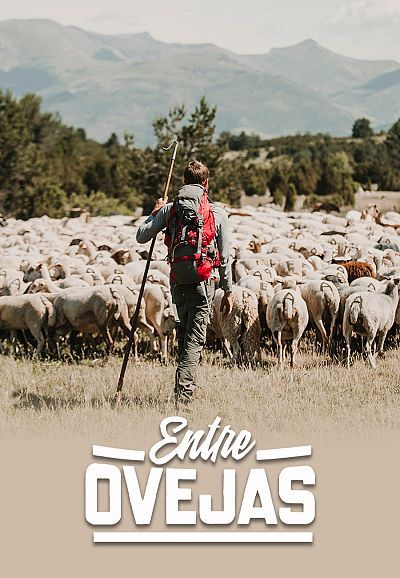 Entre ovejas