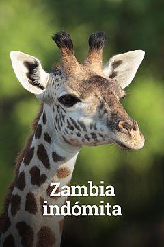 Zambia indómita