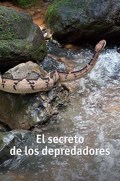 El secreto de los depredadores