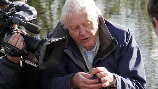 El ascenso de los animales con David Attenborough
