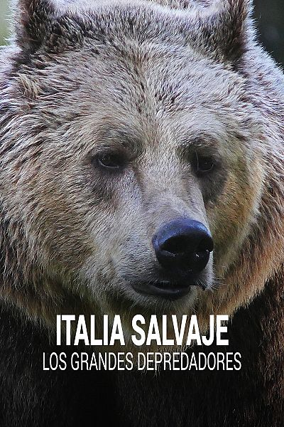 Italia salvaje. Los grandes depredadores