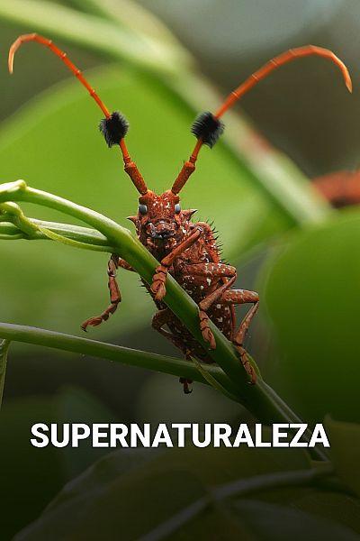 Supernaturaleza