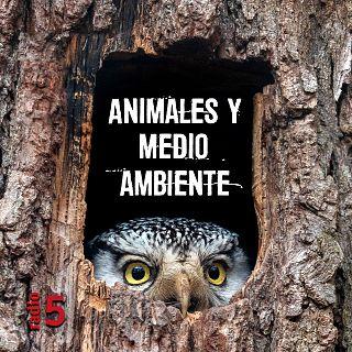 'Animales y medio ambiente' con José Ignacio Pardo de Santayana