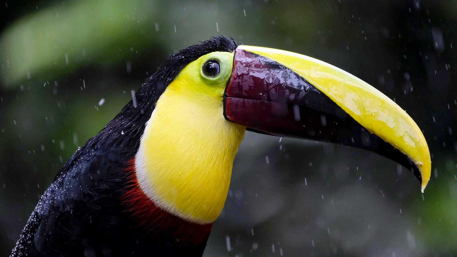 Paraísos de Centroamérica