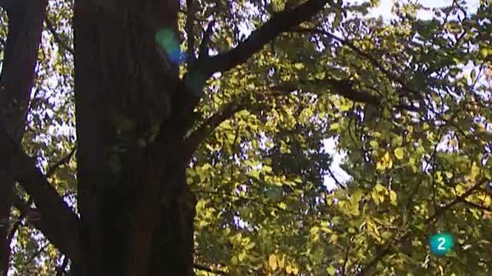 El escarabajo verde - El bosque - Ver ahora