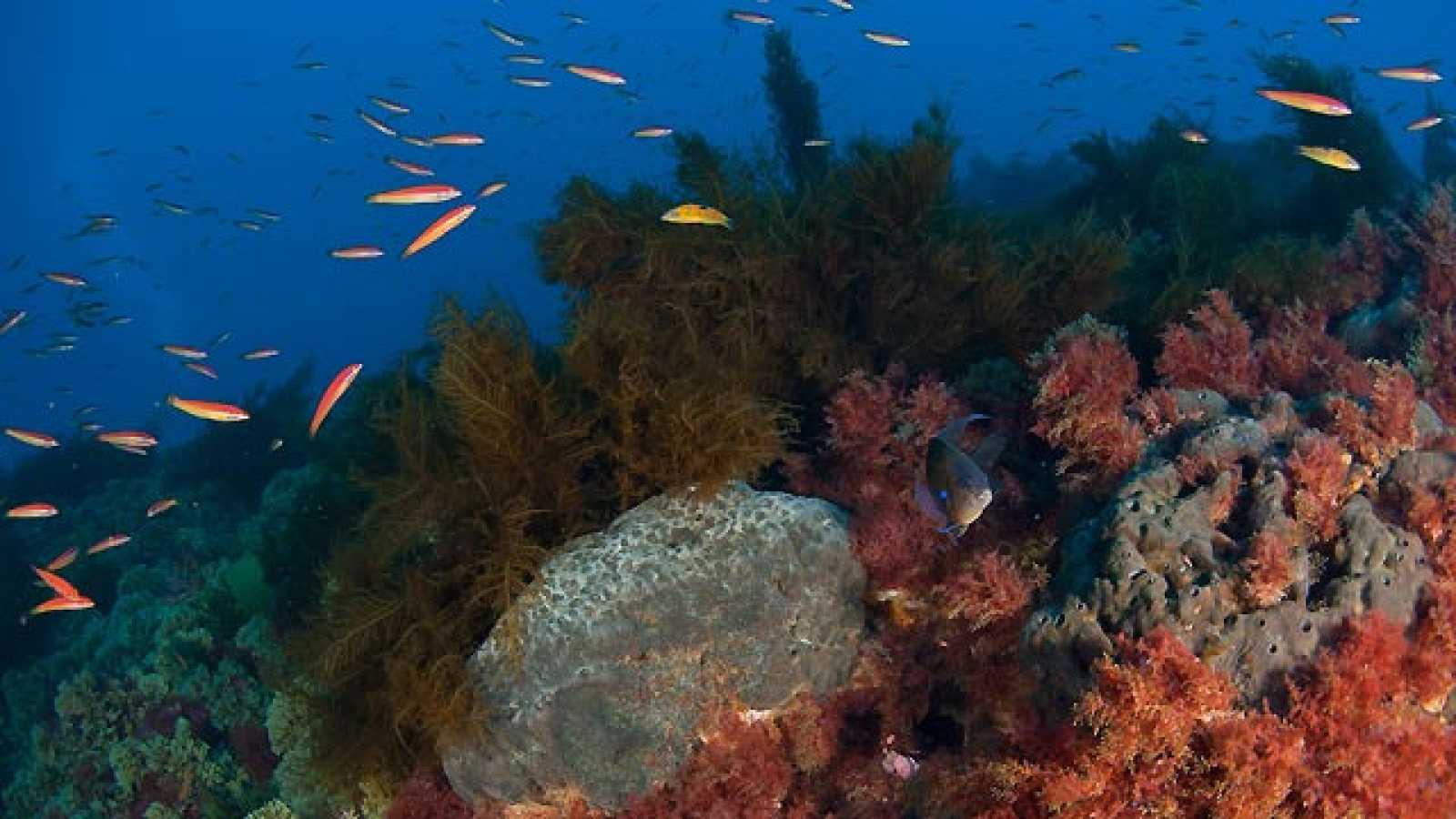 La montaña submarina de Gorringe