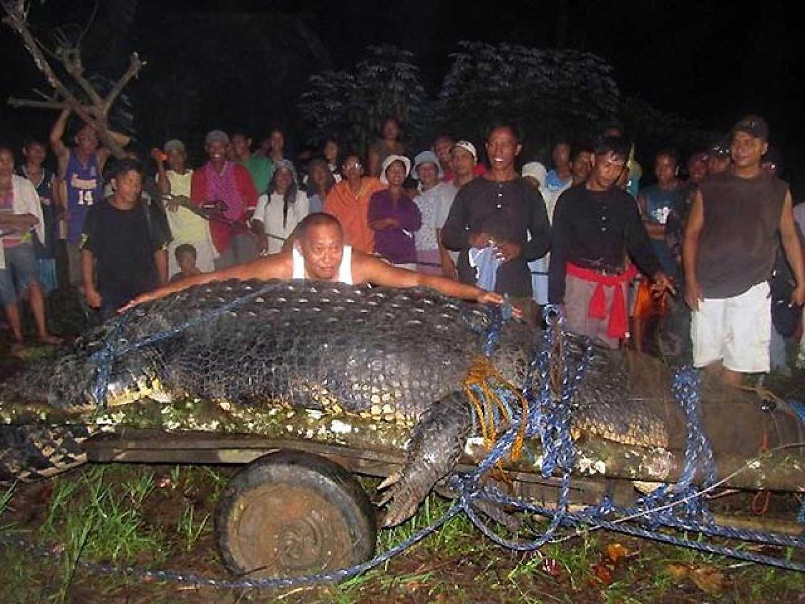 Capturan un cocodrilo gigante de una tonelada de peso y seis metros de largo