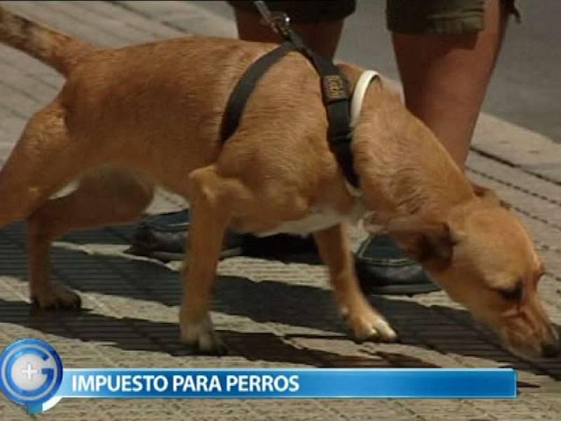 Más Gente - Benidorm cobrará un impuesto especial por tener perro